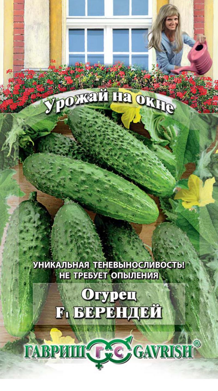 ogurec-berendey-10sht-urozhay-na-okne-gav