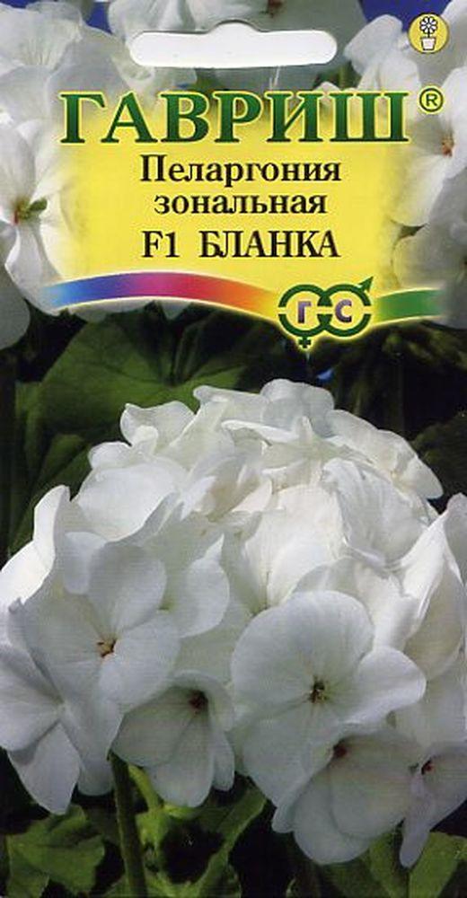 pelargoniya-blanka-4shtgavrish