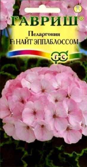 pelargoniya-nayt-yeppelblossum-gavrish