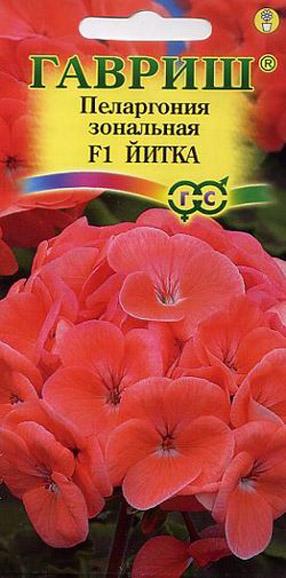 pelargoniya-zonalnaya-yitka-f-gavrish
