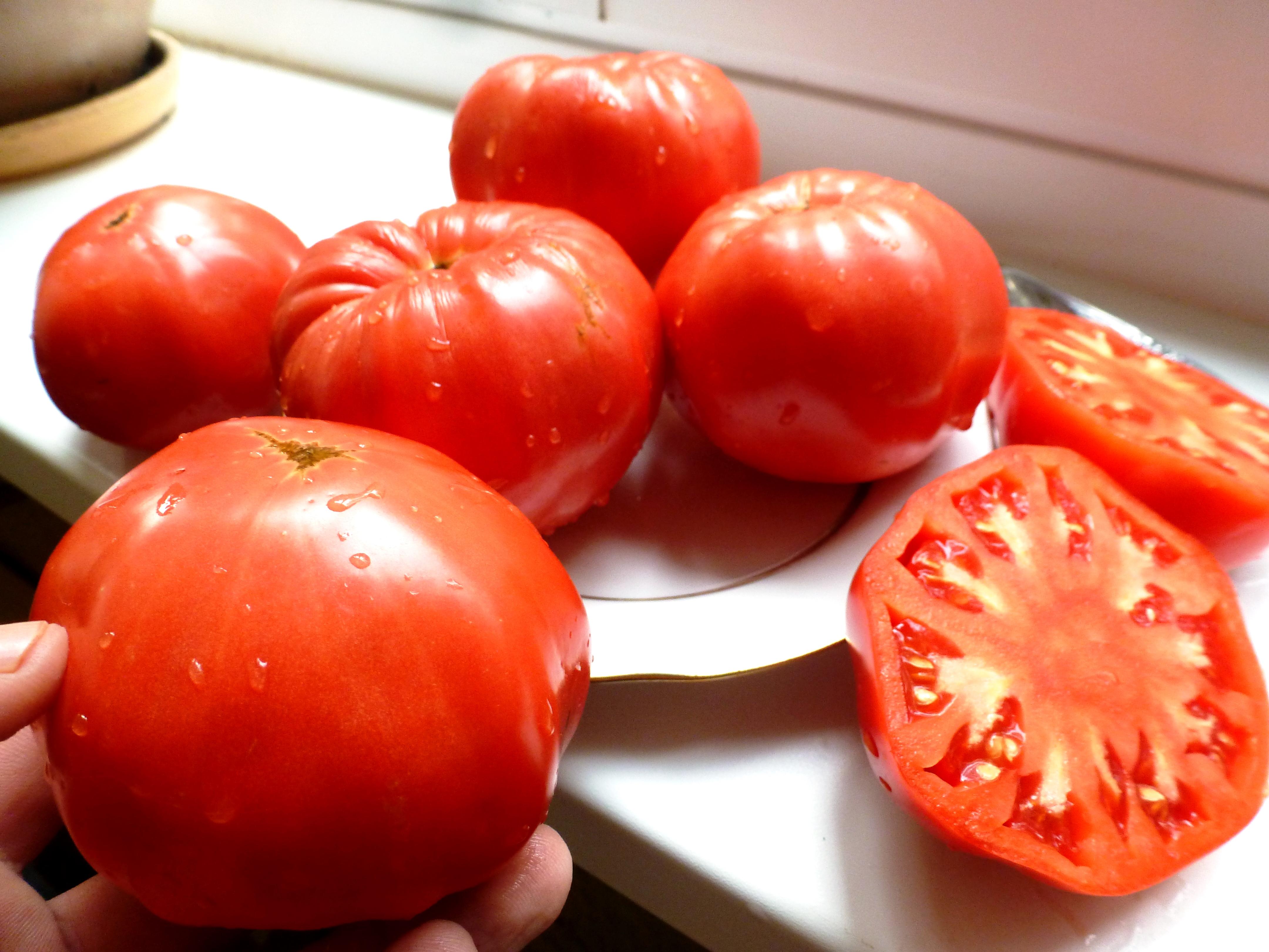 tomat-syzranskaya-roza-rannyaya