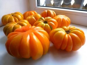 pomidory-beauty-lottringa-orange-lotaringskaya-krasav