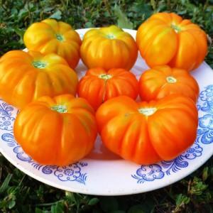 pomidory-togorific-yellow-tomato-togorifik-zhyoltyy