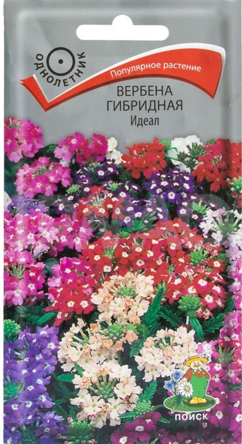 verbena-gibridnaya-ideal-02g-poisk
