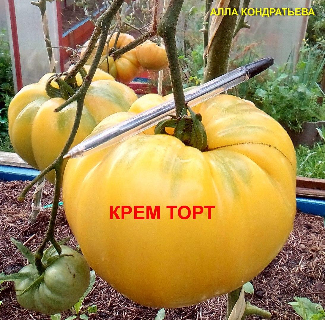 krem-tort2