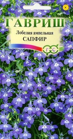 lobeliya-sapfir-ampelnaya-gavrish