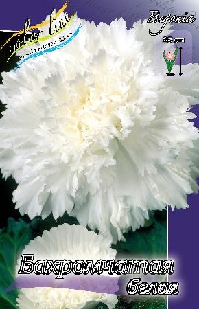 Бегония Бахромчатая белая