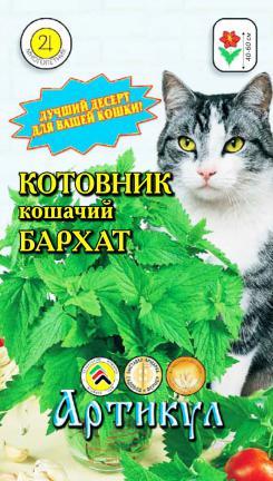 kotovnik-koshachiy-barkhat