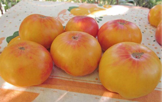 tomat-dzhordzhiya-polosatyy