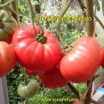 tomat-italyanskoe-derevo