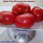 tomat-italyanskoe-derevo2