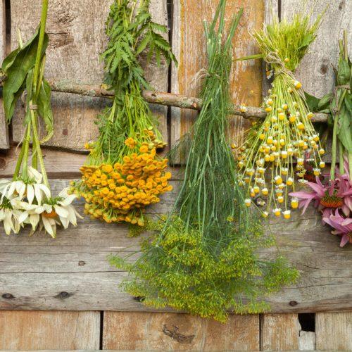 Пряно-ароматические травы различных групп