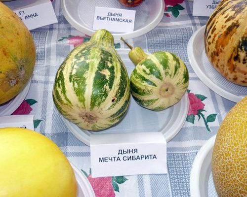 posadka-dyni-3