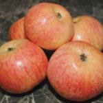 яблоня-конфетное3