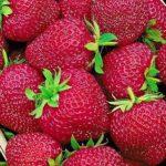 zemlynika_cherry_berry