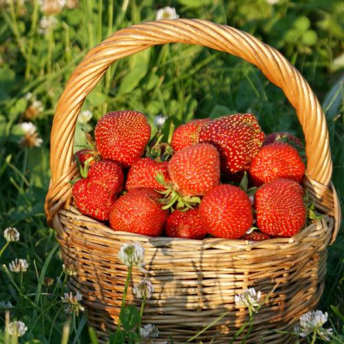 Strawberry_Wicker_basket_529158_3840x2400