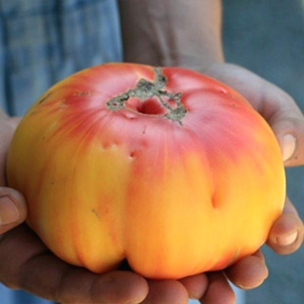 german-tomatoe-striped-tomato-german-strawberry-tomato-seeds-striped-german-heirloom-tomato-plant
