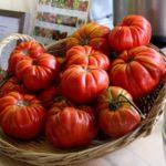 pomodoro-riccio-di-parma