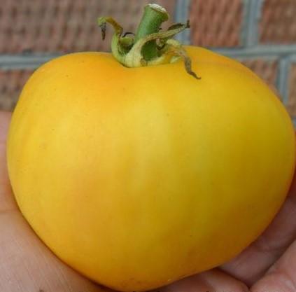 Peach Blow Sutton Gold