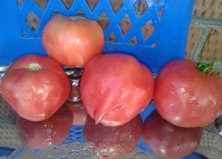 Томат-Дерево Розовое