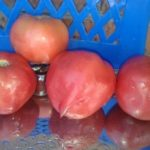 Томат -дерево розовое