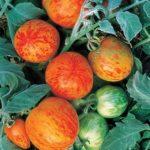 Tomat-YElberta-persikovaya-Elberta-Peach-500x500