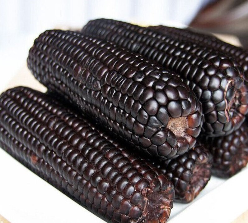 Black Waxy Corn