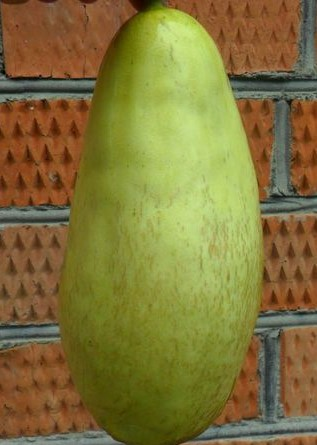 Green Giant Mango