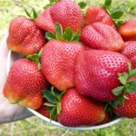 Прием заявок на саженцы садовой крупноплодной земляники!