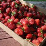 StrawberryFlat1-1024x768