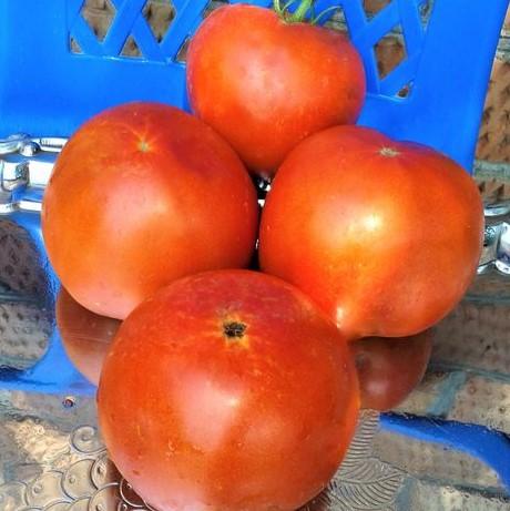 Tomat-Derevo