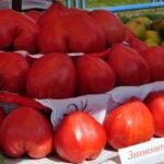 den_minusinskogo_pomidora