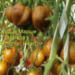 Marsha'sStarfighterHeart2-500x500