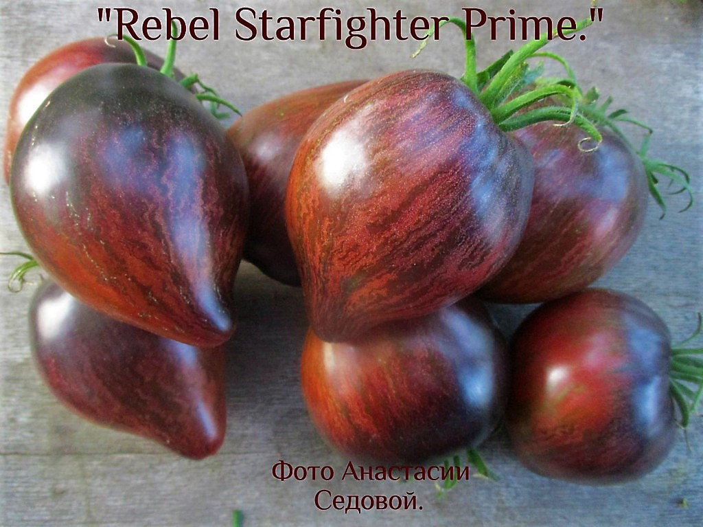 Rebel-Starfighter-Prime