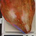 pomidor-myatezhny-zvezdny-istrebitel-nosaty-3