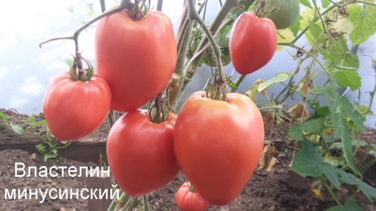властелин-минусинский-1-768x432