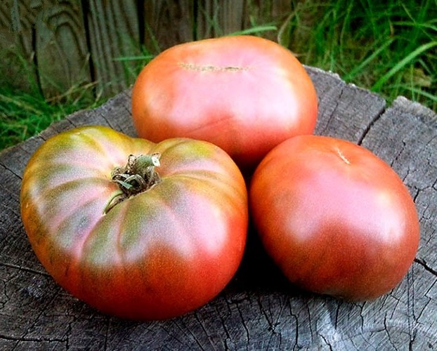 tomat-korolevskij-purpurnyj-opisanie-1