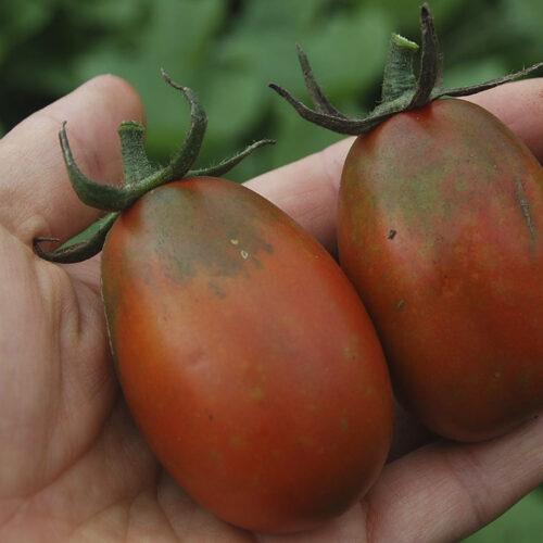 tomato-blackwaterfall-01