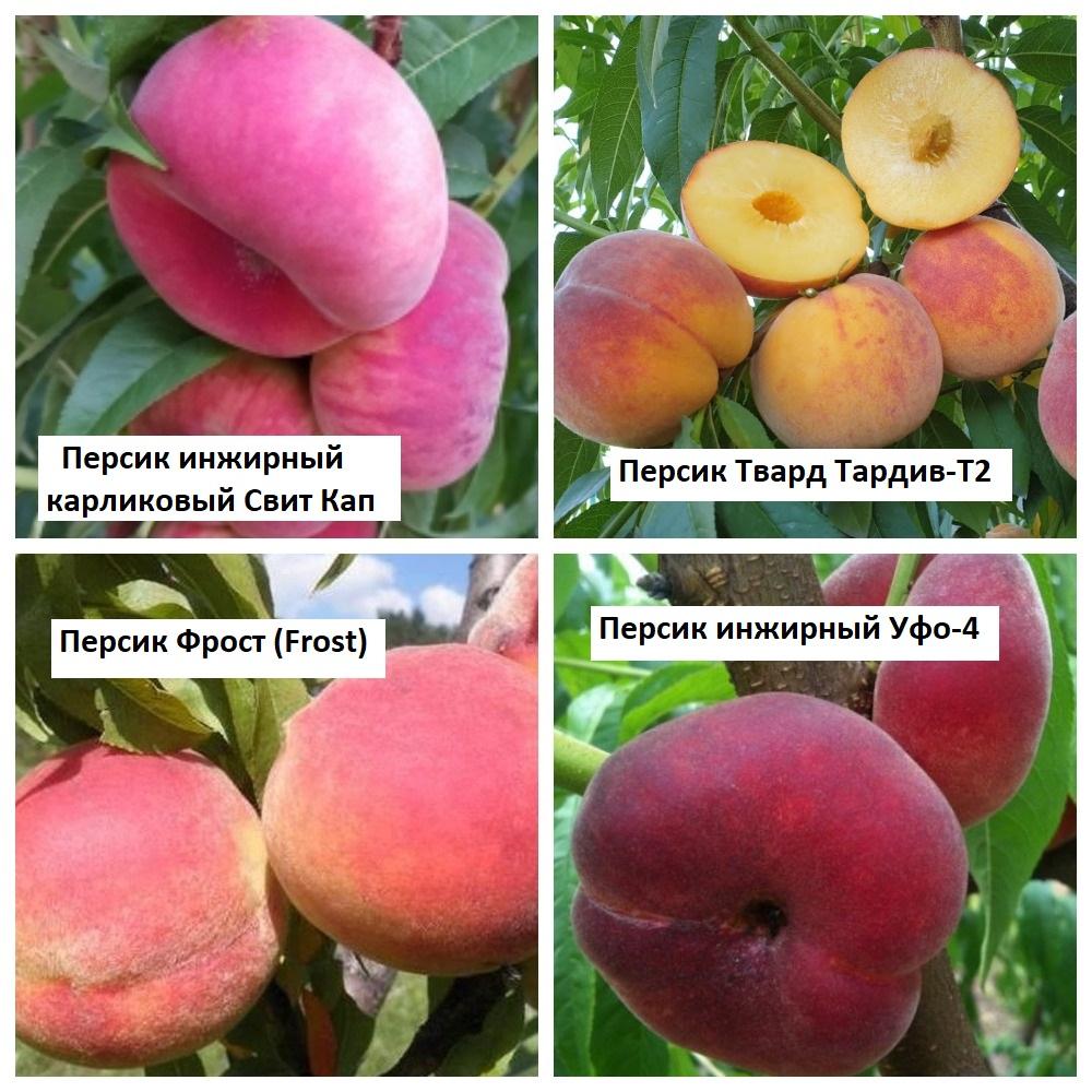 Персики с текстом