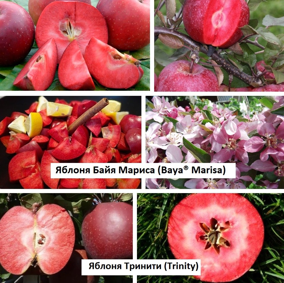Яблони красномяс с текстом