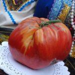 tomat_0 — копия