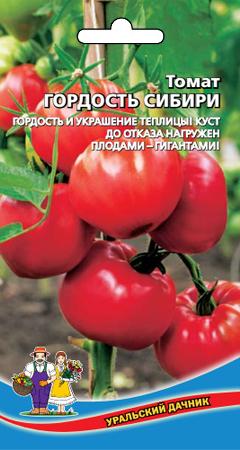 tomat-gordost-sibiri