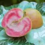 яблоня розовый жемчуг1