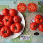 tomat-mongolskij-karlik-3