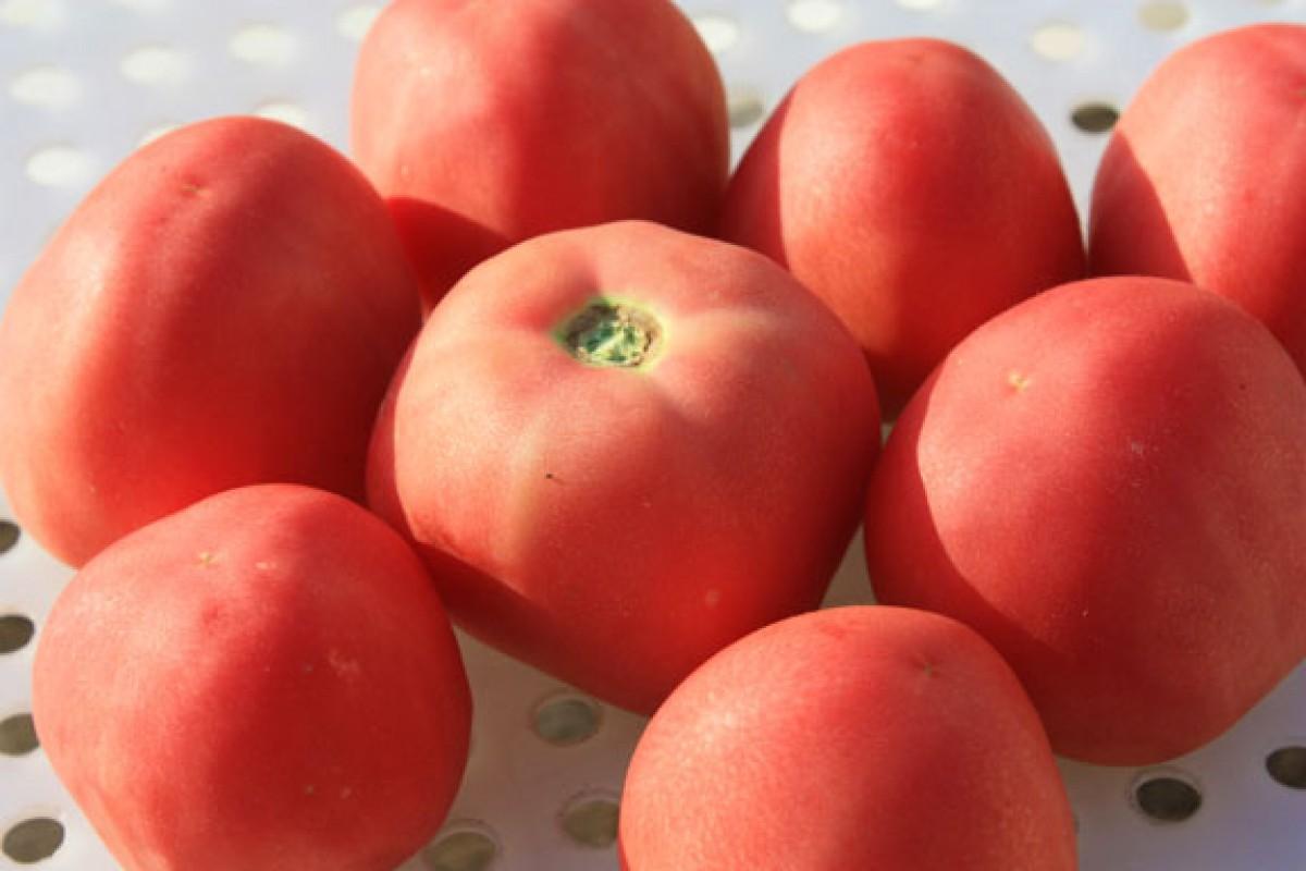 Peach Blow Sutton Red (США)