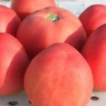 Peach-Blow-Sutton