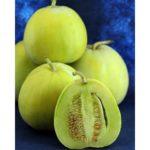 japanese-heirloom-melon-seeds-sakata-s-sweet (1)