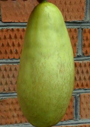 Green Giant Mango