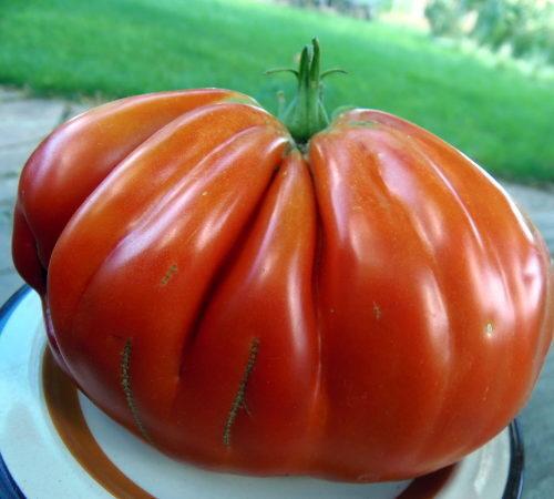 Редкие и экзотические коллекционные томаты