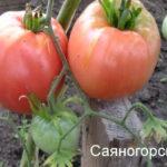саяногорские-5